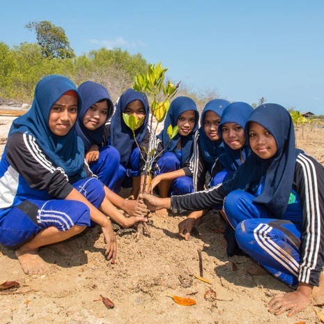 1317 School Girls Plant Mangroves--Masakambing--Indonesia