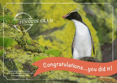 Penguin Gram - Congratulations