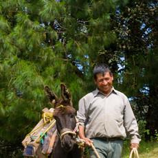 1307 Field Work--Sierra Norte--Oaxaca--Mexico