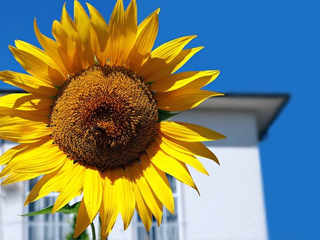 How Does the Summer Impact Your Roof?