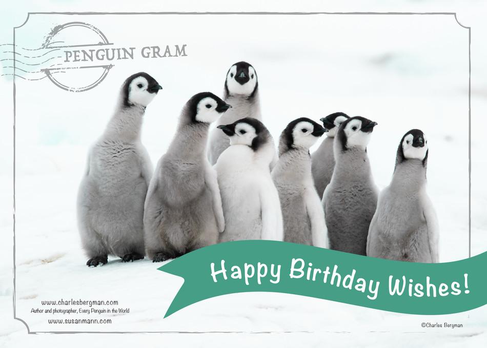 Penguin Gram - Happy Birthday