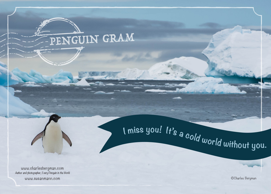 Penguin Gram - I Miss You
