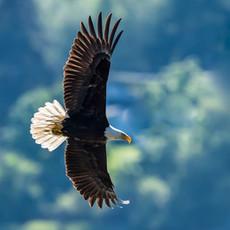 1419 Bald Eagle--Triangle Cove--Camano Island