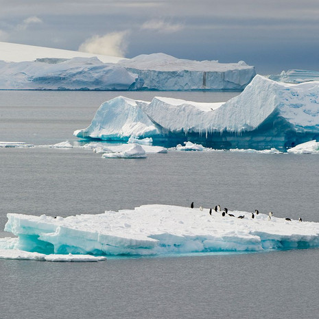 901 Icebergs--Penguins--Iceberg Barrier--Antarctic Peninsula