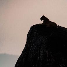 1101 African Lion Rocks--Kidepo--Uganda