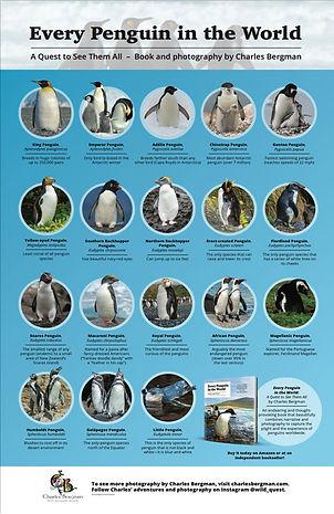 Every-Penguin-Poster-thumbnail.jpg