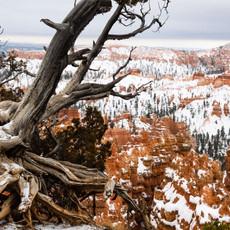 1602 Capital Reef National Park--Winter--Utah