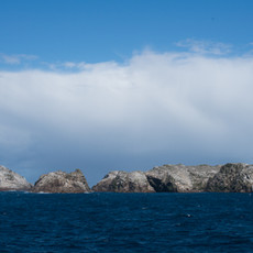 237 Bounty Islands--New Zealand