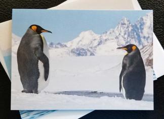Penguin Glow Card Pack