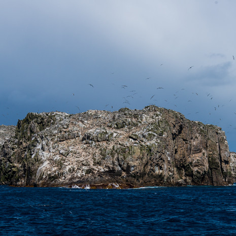 236 Bounty Islands--New Zealand