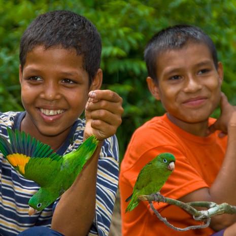 1235 Yellow-Winged Parakeet--Capture for Market--Guyana