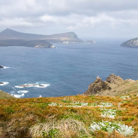 511 Campbell Island Landscape