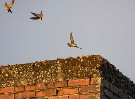 Birdwatching Magazine Article