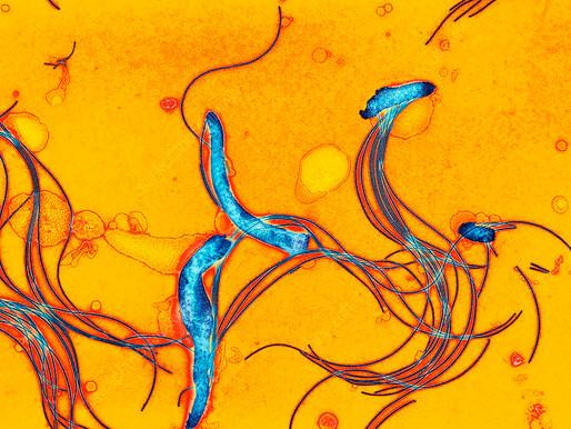 Doença de Lyme: Borrelia Burgdorferi
