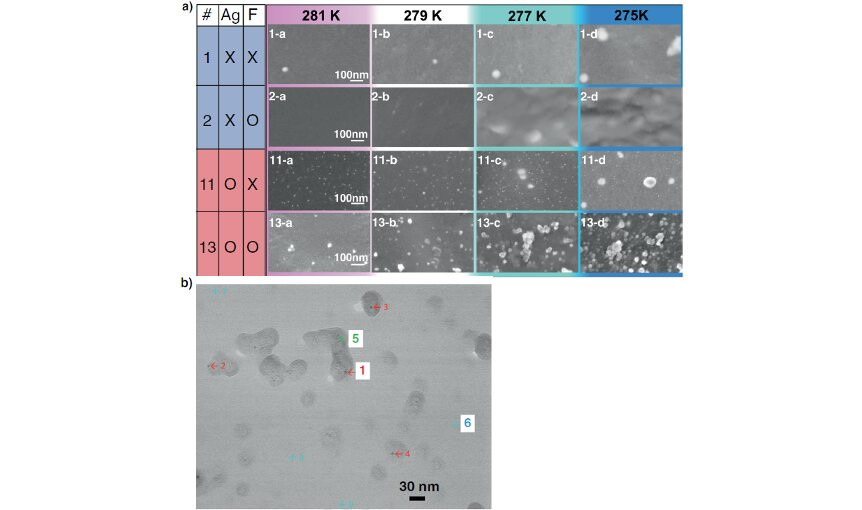 """a) HAADF-STEM images of replica films prepared from samples #1, #2, #11, and #13 of tetra-n-butylammonium 3-methylpentanoate (TBA-3MP) aqueous solutions. In samples #11 and #13, silver nanoparticles 5-10 nm across were observed. In sample #13, which included both silver nanoparticles and F- anions, 10-30 nm clusters existed even at 281 K. With further decreases in temperature, the number density of the clusters increased, and then TBA-3MP semiclathrate hydrate crystallized with a small degree of supercooling. b) SE-STEM image of a different area of the same film as """"13-a"""" in panel a). Clusters of size 10-30 nm envelop a silver nanoparticle (black dots indicated by red arrows) Credit: T. Sugahara/Osaka University and H. Machida/Panasonic Corporation"""