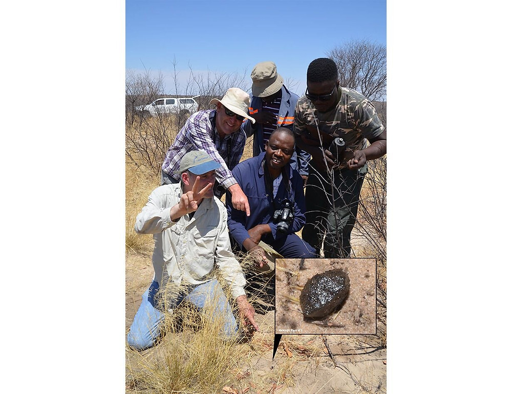 Mohutsiwa Gabadirwe (center of photo) and Peter Jenniskens (left, kneeling) at the site of the second find of a piece of asteroid 2018 LA recovered in the Central Kalahari Game Reserve in central Botswana. Credit: SETI Institute