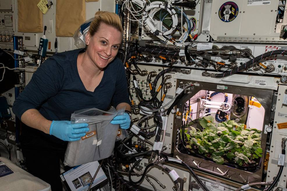 On Nov. 27, 2020, NASA astronaut and Expedition 64 Flight Engineer Kate Rubins checks out radish plants growing for the Plant Habitat-02 experiment that seeks to optimize plant growth in the unique environment of space and evaluate nutrition and taste of the plants.Credits: NASA