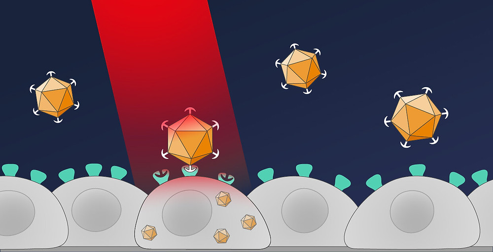 In their new method, the Freiburg researchers introduce the genetic information with an optical remote control. As a result, only cells that are illuminated with red light take up the desired genes. Credit: Michal Roessler