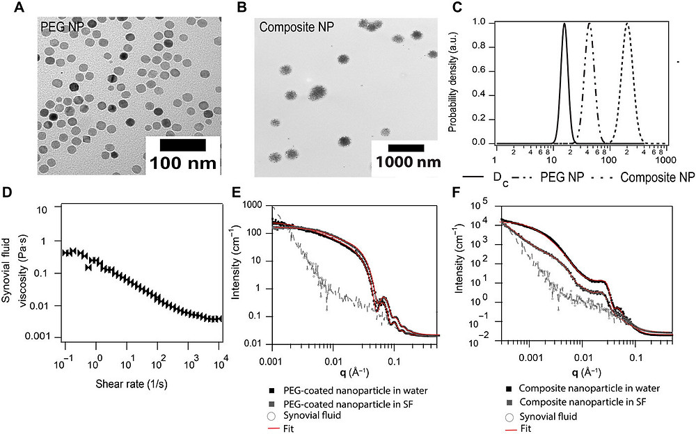 Characterization of nanoparticles and synovial fluid. Transmission electron microscopy images of (A) PEG5k- and (B) PEG4.9k-PLA6k–coated nanoparticles. (C) The core diameter distribution compared to the hydrodynamic diameter distributions obtained from dynamic light scattering (DLS). (D) Rheological characterization of synovial fluid. SAXS characterization of (E) PEG-coated nanoparticles and (F) composite nanoparticles in water and synovial fluid, with corresponding signal from bovine synovial fluid. Credit: Science Advances, doi: 10.1126/sciadv.abf8467