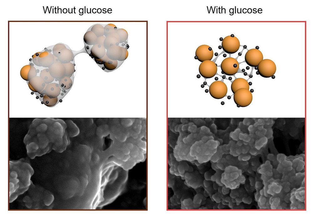 By incorporating sugar into the web-like architecture of the electrode they have stabilized the sulfur, preventing it from moving and blanketing the lithium electrode. Credit: Monash Energy Institute