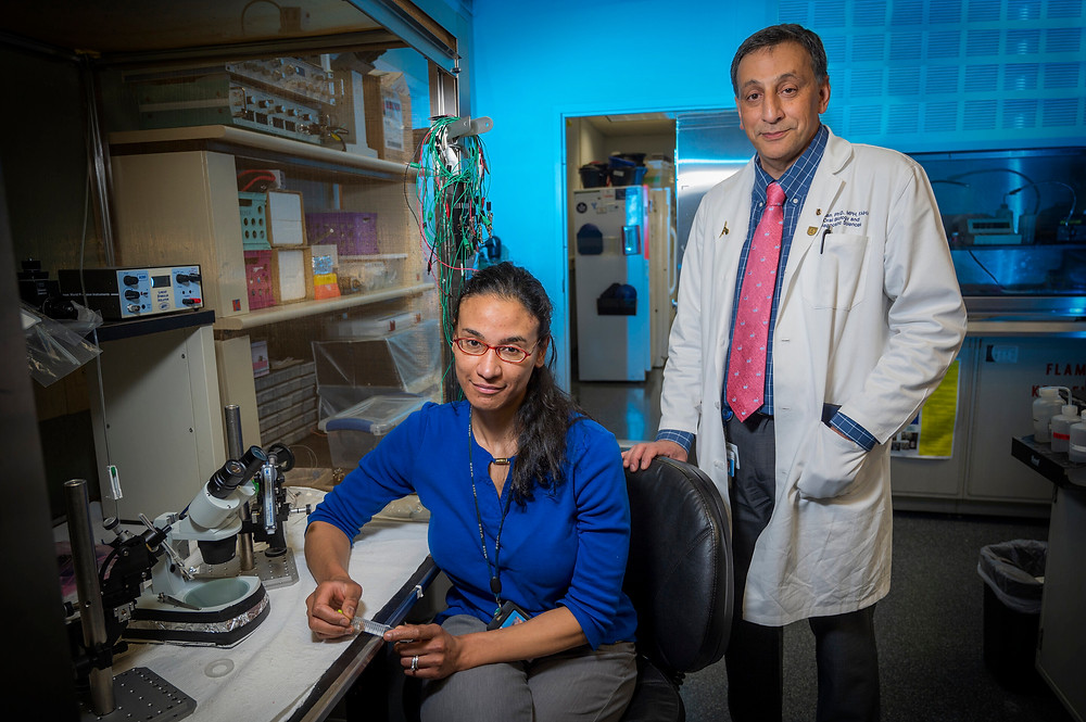 Drs. Alexis Stranahan and coauthor immunologist Dr. Babak Baban. Credit: Michael Holahan, Augusta University