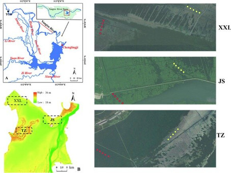 Hydrological environment influences litter carbon input into soil organic carbon pool in Dongting