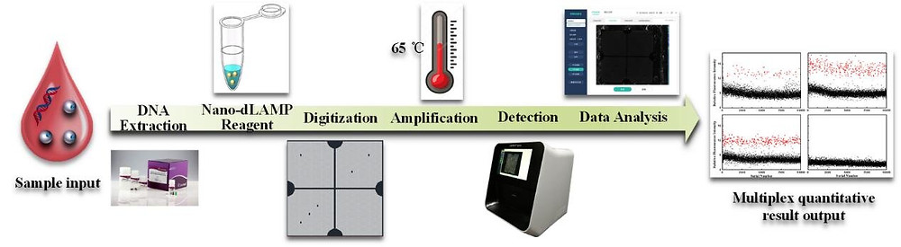 Fig. Workflow diagram of the nano-dLAMP detection system. Credit: SIBET