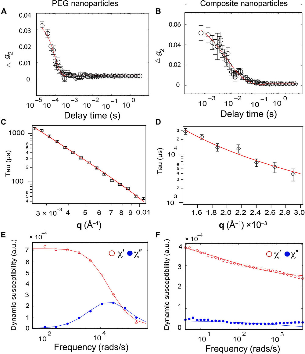 X-ray Photon Correlation Spectroscopy (XPCS) and DMS measurements of nanoparticles in synovial fluid. Representative autocorrelation function for (A) PEG-coated and (B) composite nanoparticles in synovial fluid. Correlation between characteristic time and wave vector used to extract diffusion coefficients from XPCS measurements of (C) PEG-coated and (D) composite nanoparticles and their corresponding fit curves. The scaling of tau versus q is −2.4 in (C) and − 2.6 in (D). DMS measurements for (E) PEG-coated and (F) composite nanoparticles in bovine synovial fluid. Errors in (A) and (B) are SD of the delay time averaged. Errors in (C) and (D) are the error associated with characteristic time. Credit: Science Advances, doi: 10.1126/sciadv.abf8467