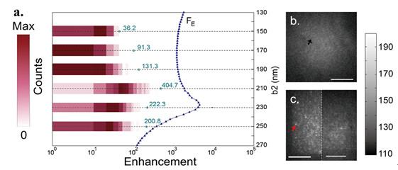 (a) Histogram of fluorescence enhancement with asymmetric double-bar antennas. Each histogram shows the distribution of fluorescence enhancement coming from molecules near asymmetric double-bar antennas with different bar-lengths. Maximums of simulated enhancement are indicated with blue dash-dotted lines (b) Fluorescence image of AIEE1000 in PMMA without antennas. (c) Fluorescence image of asymmetric antenna (left-half) and symmetric antenna (right-half) array coated with AIEE1000 in PMMA. Credit: Wenqi Zhao, Xiaochaoran Tian, Zhening Fang, Shiyi Xiao, Meng Qiu, Qiong He, Wei Feng, Fuyou Li, Yuanbo Zhang, Lei Zhou, and Yan-Wen Tan