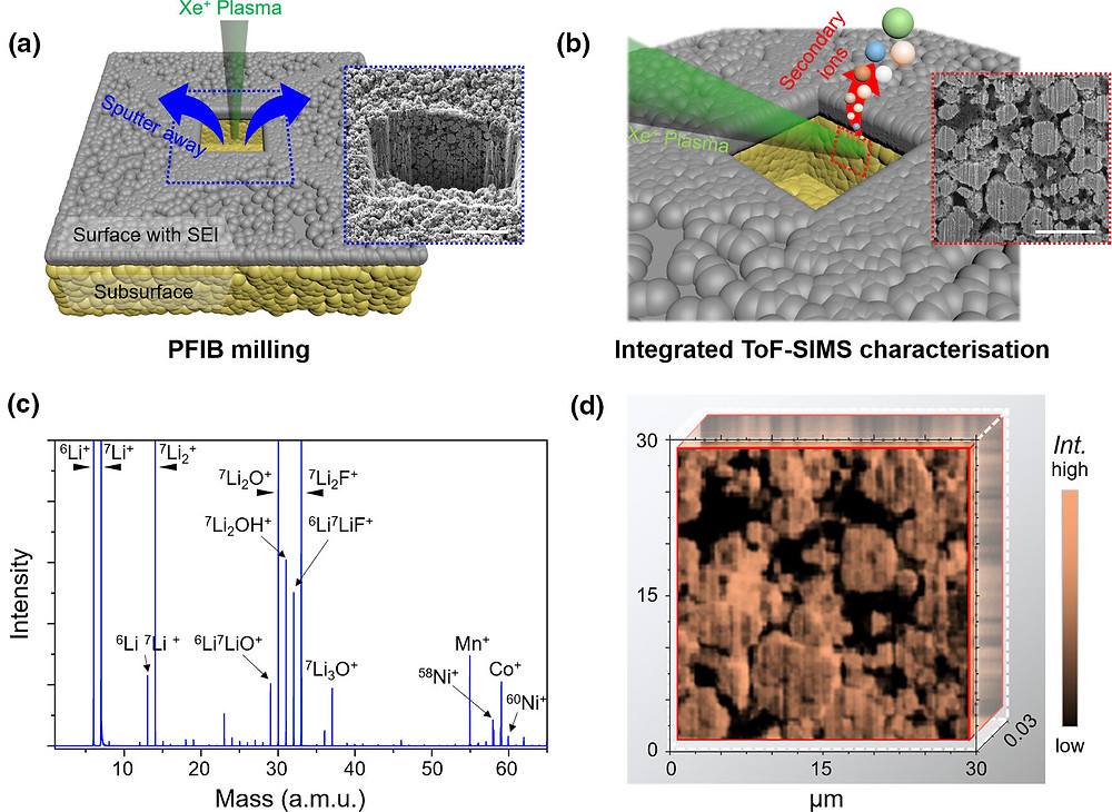 Integrated Xenon ion plasma FIB milling and ToF-SIMS technique. a) The schematic diagram of the first step Xe+ PFIB milling for the cycled NMC electrode, and the SEM image of the cross-sectional interface (inset, blue box, scale bar: 40 μm). (Gray layer: external surface with SEI, Yellow layer: subsurface underneath the external SEI.) b) The schematic diagram of the integrated ToF-SIMS characterization for the selected area (red box) on the cross-sectional interface of cycled NMC cathode, and the SEM image of the selected area (inset, red box, scale bar: 10 μm). c) The mass spectrum survey obtained by ToF-SIMS characterization, and the index illustration of secondary ions. d) The lithium chemical mapping of the above detected area on the cross-sectional interface of cycled NMC electrode (integrated from 100 tomographic frames, equivalent to a total lengthways depth of 30 nm from the cross-sectional interface). Credit: DOI: 10.1002/eem2.12221