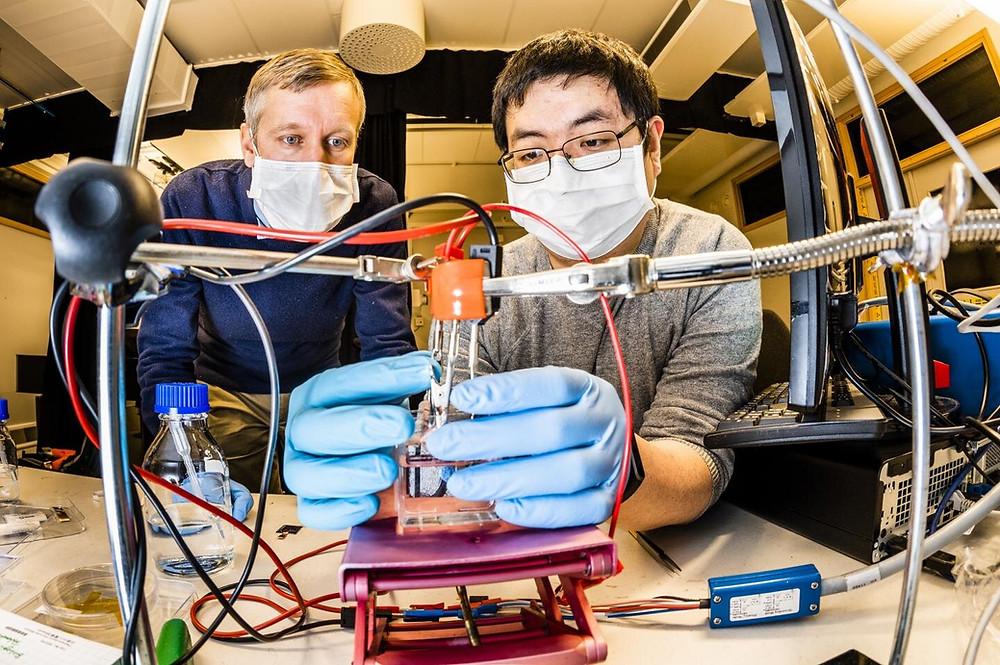 Magnus Jonsson, associate professor, and Shangzhi Chen, postdoc, at the Laboratory of Organic Electronics at Linköping University. Credit: Thor Balkhed