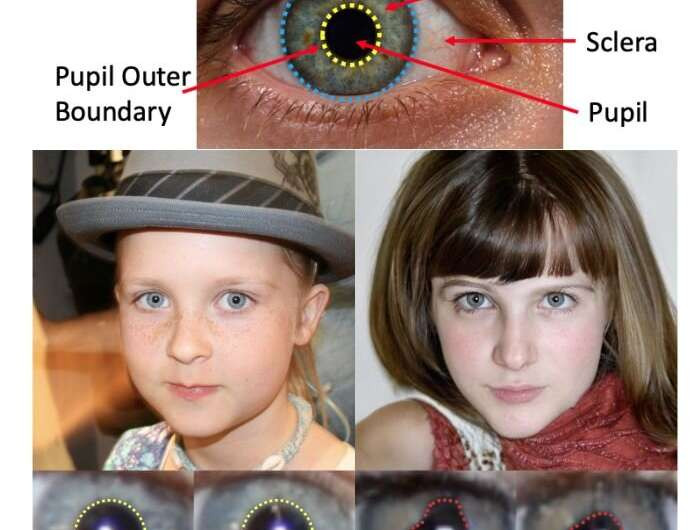 Anatomy structures of a human eye. Bottom: Examples of pupils of real human (left) and GAN-generated (right). Note that the pupils for the real eyes have a strong circular or elliptical shapes (yellow) while those for the GANgenerated pupils are with irregular shapes (red). And also the shapes of both pupils are very different from each other in the GAN-generated face image. Credit: arXiv:2109.00162v1 [cs.CV]