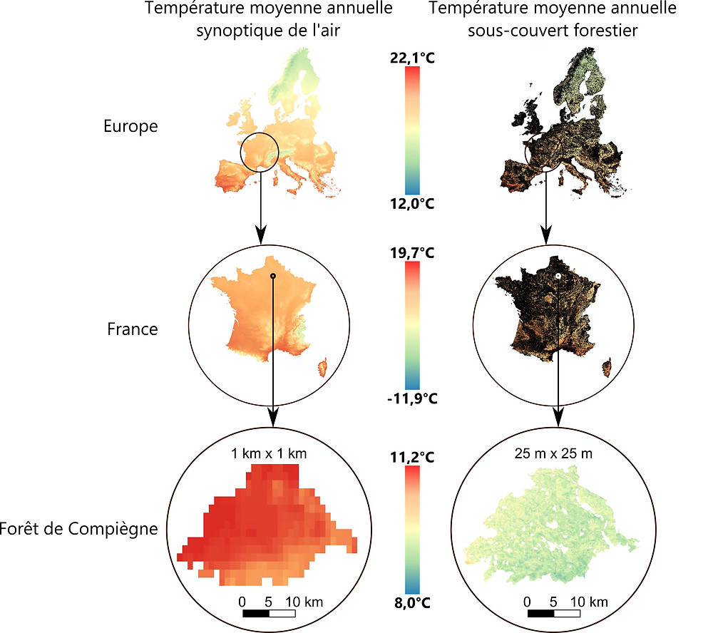 Maps comparing mean annual free-air and sub-canopy temperatures.Left: mean annual temperatures as predicted by spatial modelling of climatological series for the period 1970-2000, from conventional weather stations WorldClim, https://www.worldclim.org.Right: mean annual sub-canopy temperatures. On the maps of Europe and France on the right, the areas in black correspond to non-forested areas. The last zooming window shows the spatial predictions of sub-canopy temperatures over the whole state forest of Compiègne, in the Oise department (north of Paris), covering an area of 14,357 ha (144 km2). Credit: WorldClim / Stef Haesen / Koenraad Van Meerbeek