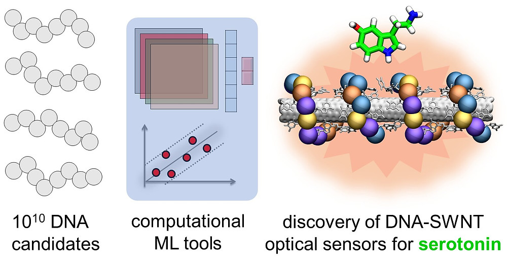 Near-infrared (nIR) fluorescence response datasets for ~100 DNA-single walled nanotube conjugates were used to train machine learning (ML) models to predict new unique DNA sequences with strong optical response to neurotransmitter serotonin. Credit: Landry, Vuković, et al.