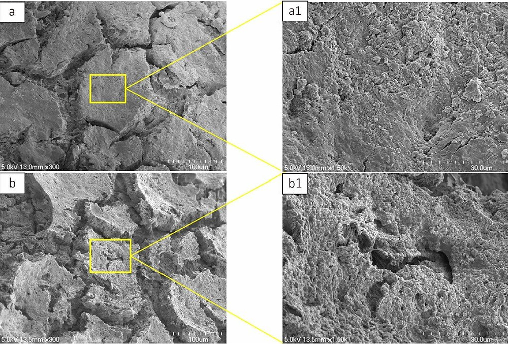 Cross sectional microstructures in the set CPC samples (a) without and (b) with alginate (20 wt%). Little porosity was detected in CPC sample without alginate (a1). Adding alginate resulted in the formation of macropores within the bulk materials (b1). Credit: Osaka City University