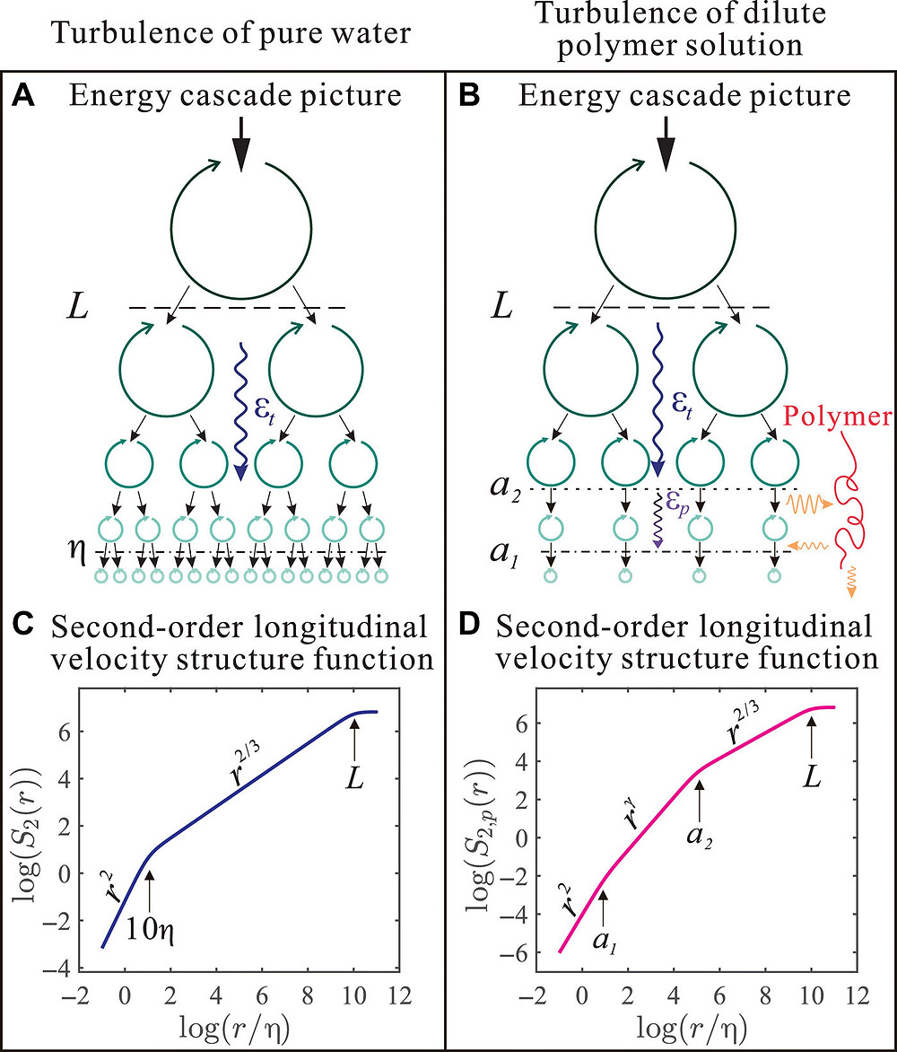 Physical picture of the turbulent energy cascade and its manifestation on the second-order longitudinal velocity structure function (VSF). (A and B) Cartoons showing the physical picture of the energy cascade in turbulent flow of pure water and dilute polymer solution. (C and D) The second-order longitudinal VSF in turbulent flow of pure water case and dilute polymer solution case. Credit: Science Advances, doi: 10.1126/sciadv.abd3525