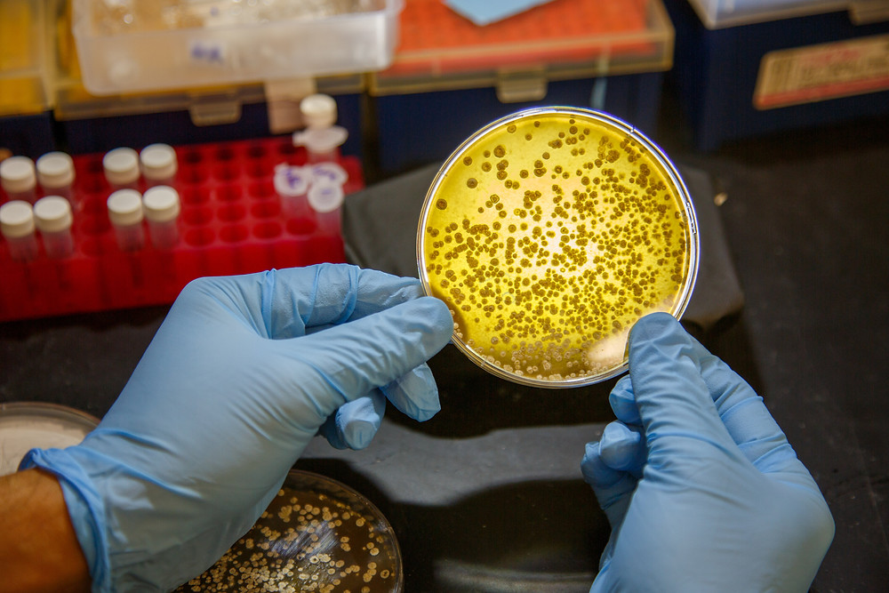 Scientists working in the lab of Ben Shen, PhD, at Scripps Research, Florida have found a new family of sulfur-installing enzymes by mining the genomes of bacteria in their microbial strain collection. Credit: Scott Wiseman for Scripps Research.