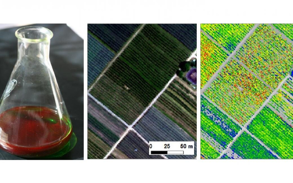 From left to right: Solar induced chlorophyll-a fluorescence can be seen with bare eyes after dissolving the chlorophyll from leaves into a solvent and placing the extract under direct sunlight. SIF can be measured at the plant, ecosystem (here: apple orchard), and global scales. Credit: Albert Porcar-Castell