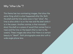 J_O_V_A_N_A_V_U_L_E_T_I_Ć_Photographic_eyes_Page_20