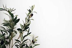 olive-branch-hero.jpg