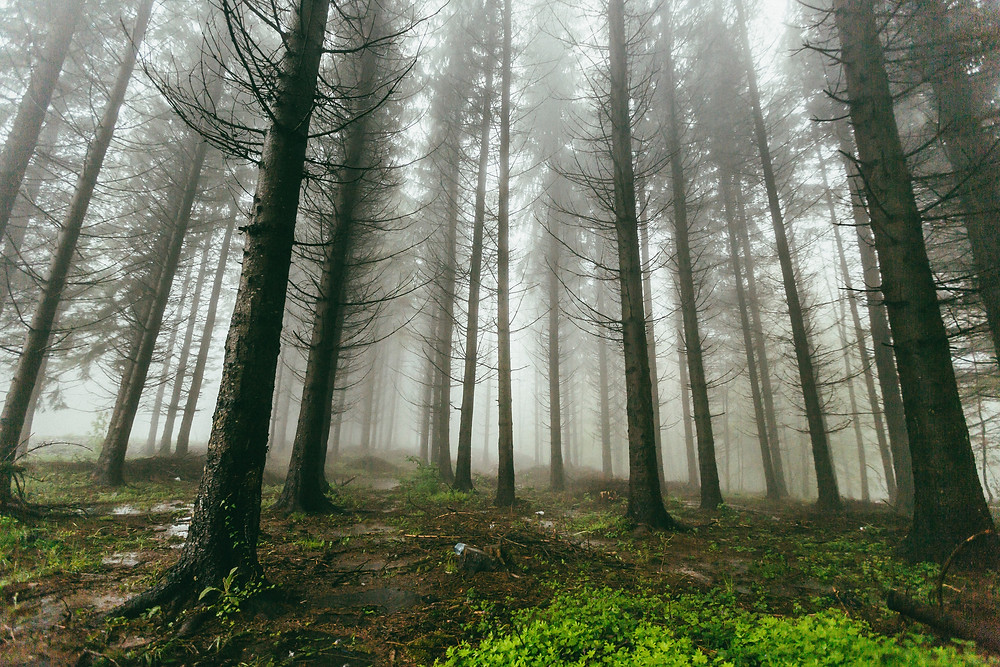 Foggy wooded forest in Serbia