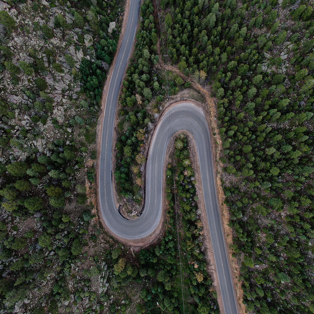Switchback roads in pine forest