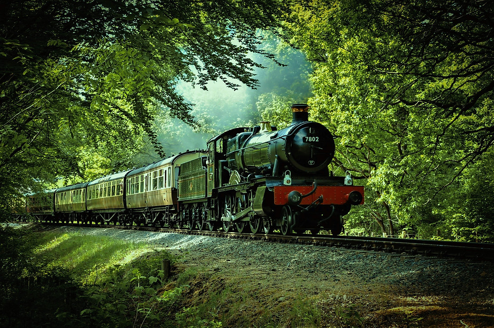 Old train in green forest.