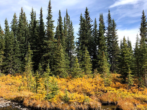 Perfect RMNP Hikes to Spot Fall Colors