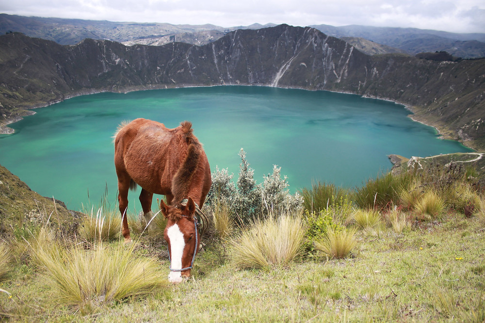 Horse in front of blue lake