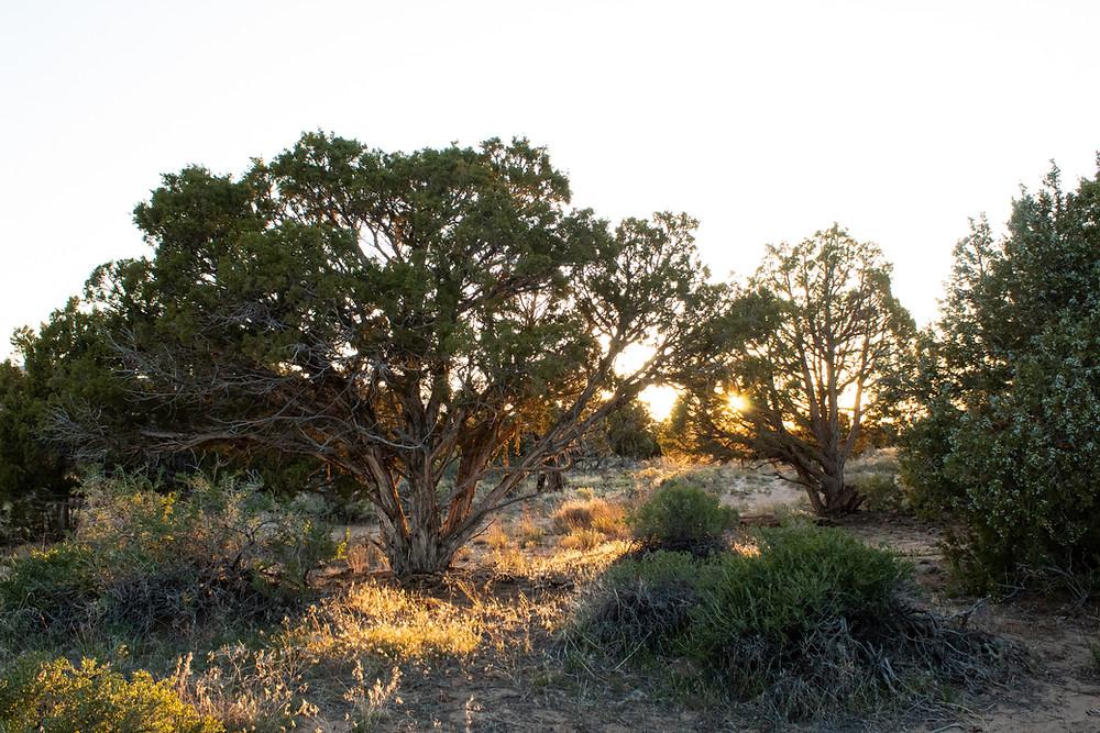 Sunset on desert trees in Colorado