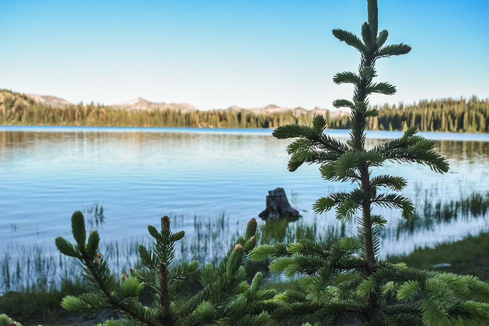 Pine tree in front of mountain lake in Idaho