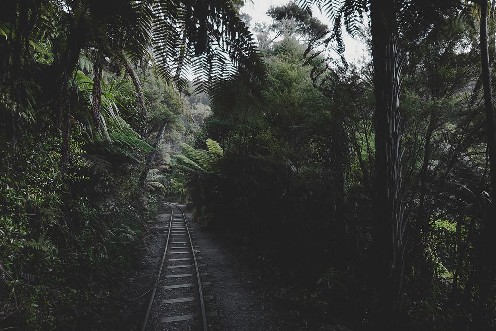 Train track through deep jungle.