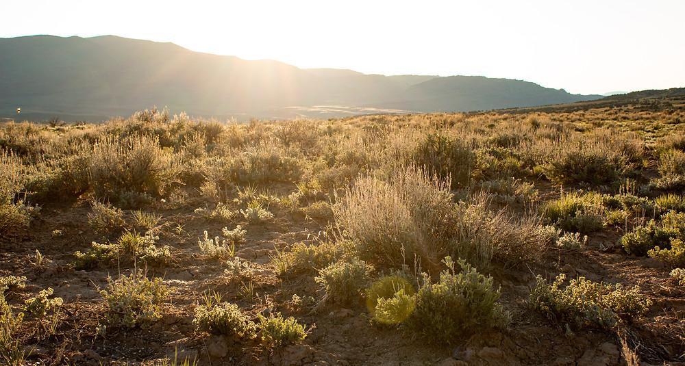 Desert landscape during sunset