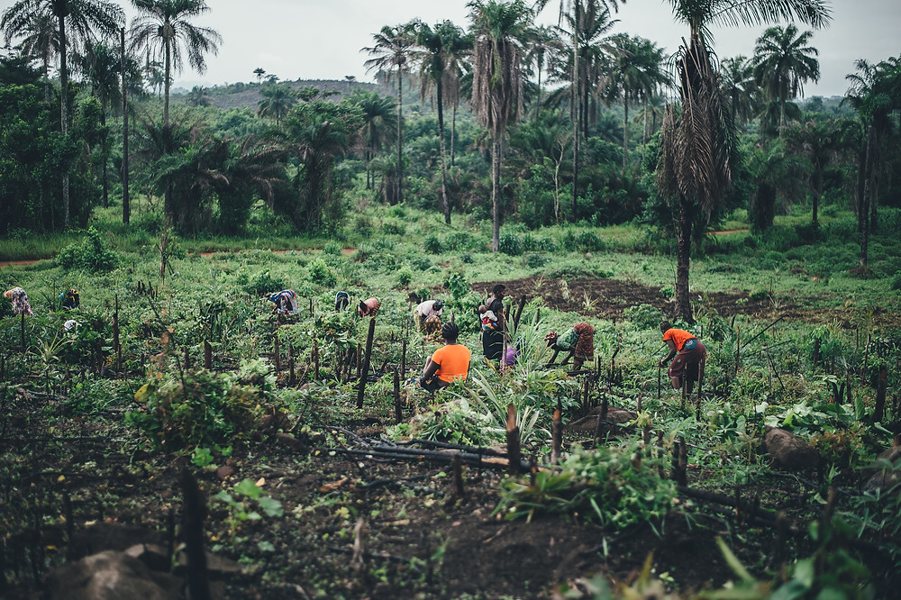People in tropical field in Sierra Leone.